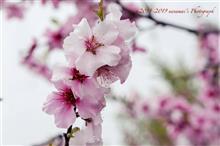 春の花散歩(その2)