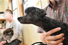 ノーテンキ犬に狂犬病予防注射とフィラリア検査