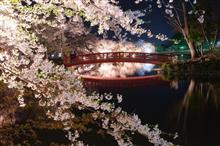 近所の桜2019