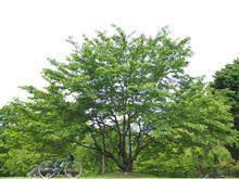 新緑とロードバイクと(^∇^)