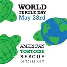 今日は「世界亀の日」