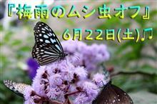 ☔梅雨のムシ虫オフ(*´ω`*)☔