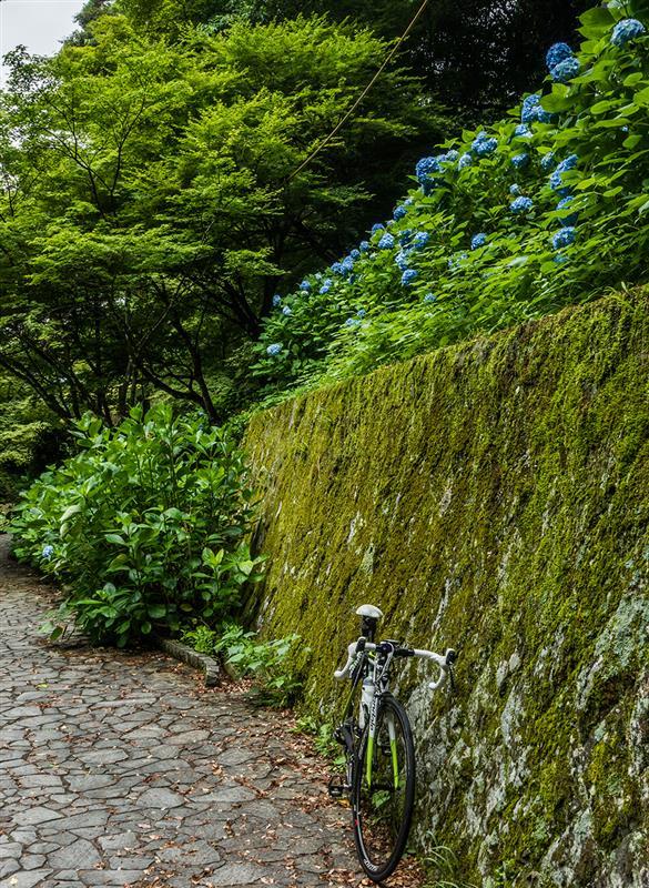 今朝のサイクリング --- 梅雨入り前の梅雨空。