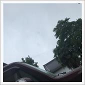 予報どおり雨☂️
