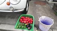 夏野菜とスバル360デイ。