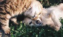 犬と猫の居る風景・・・ ワンコもニャンコも夏は嫌い!