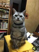 """猫の居る風景・・・ 71 オイラと""""お嬢(仮名)""""の関係って?"""