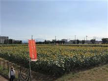 【チャリンコ通信】ひまわりガーデン武蔵村山に行ってきました。