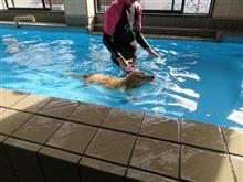 ハッピー、持参の玩具で遊ぶ   #犬 #ハッピー #ミニチュアダックスフント #お台場ドッグリゾート #プール #水泳 #玩具