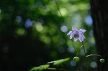 森の妖精に会いに軽井沢へ。