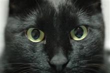 画像あり!犬より巨大な「巨大黒猫」ついに撮影される!完全にこれは・・・