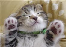 猫のこの仕草に癒されます😍
