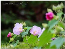 ある日の花さんぽ <前編>