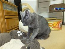 2019年9月の猫神様の日 #猫 #猫神様 #猫神様の日 #偲ぶ #体重測定