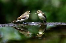小鳥の楽園