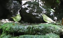 小鳥とお友達