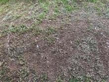 自宅庭の草刈り