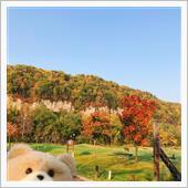 北海道の紅葉,層雲峡,紅葉2 ...
