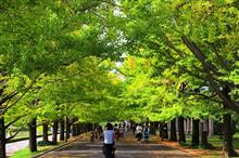 昭和記念公園のコスモスは・・・