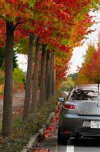 深まる秋と、僕のGT (*´д`*)
