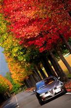 秋山に もみつ木の葉のうつりなば さらにや秋を見まく欲りせむ (*´д`*)