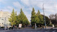 今年は色付きそう  #日吉 #慶応義塾大学 #日吉キャンパス #銀杏並木 #銀杏