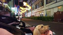 横浜中華街・2020春節燈花  #犬 #ハッピー #ミニチュアダックスフント #2020春節燈花 #横浜中華街 #春節燈花 #春節