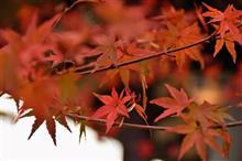 松島、瑞巌寺、紅葉。