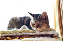 ネコは可愛いし写真は楽しいし腰は痛いし
