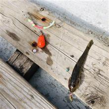【チャリンコ通信】中の人、横十間川でハゼ釣りをする。