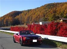 麓は晩秋、てっぺんは初冬のビーナスライン、八ヶ岳