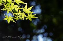 秋の陽さんさん Part2