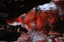 奈良公園に紅葉を撮りに行ってきました♪