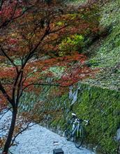 週末のサイクリング --- 最後の紅葉。