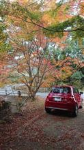 紅葉を探して🍁佐賀県