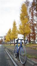 冬の散歩道♪