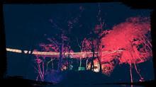 チバラギ紅葉観光🍁 奥久慈 夜紅葉😁