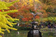 晩秋の日比谷公園と神宮外苑散策