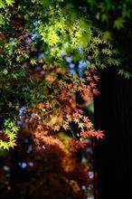 秋を探しにふらりドライブ