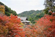 和楽『🍁秋の癒し癒されオフ🍂』に行ってきました~(*´▽`*)