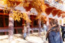 今回Vol.6のカメ通オフ('ω')ノ🎶談山神社🎶