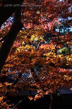 最後の紅葉と湧水群