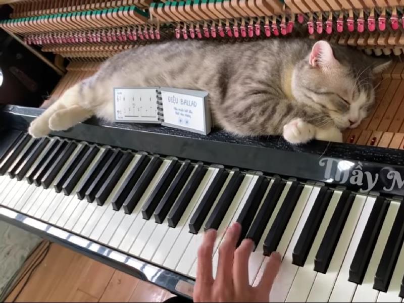 ピアノ ござ ストリート