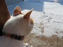雪と戦う男 & 戦わないネコ !?