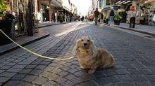 ハッピー、元町と中華街へ   #犬 #ハッピー #ミニチュアダックスフント #横浜元町 #キャラバンコーヒー #MOTHERHOUSE #ポンパドウル