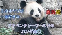 ▼【動画】アドベンチャーワールドのパンダ達(①▼良浜編)