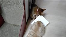 巡り巡って   #猫 #あや #アビシニアン #犬 #ハッピー #ミニチュアダックスフント #紙袋