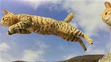 今年からホップ、ステップ、飛び猫😸笑
