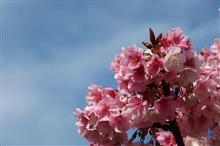 静岡Touring!春よまだ見ぬ春(熱海桜編)♪