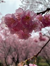 ローターの錆? 雪割り桜